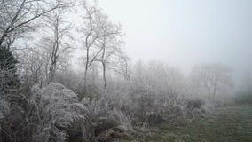 Filiali bianche congelate Paesaggio della foresta video d archivio