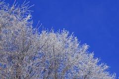 Filiali bianche su cielo blu Fotografie Stock Libere da Diritti