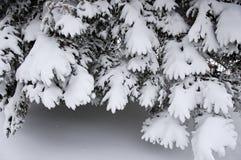 Filiali con neve fotografie stock