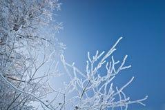 Filiali congelate Fotografia Stock Libera da Diritti