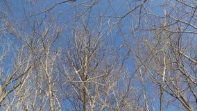 Filiali degli alberi stock footage