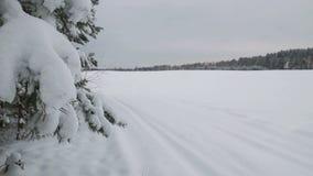 Filiali del pino coperte di neve video d archivio