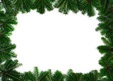Filiali del pino su priorità bassa bianca Fotografia Stock Libera da Diritti