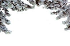 Filiali del pino in una neve Immagini Stock