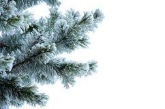 Filiali del pino in una neve Fotografia Stock Libera da Diritti