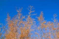 Filiali dell'albero fotografie stock libere da diritti