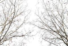 Filiali dell'albero Immagini Stock