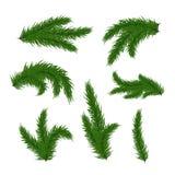 Filiali dell'albero di Natale Immagine Stock