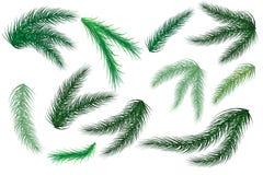 Filiali dell'albero di Natale Insieme dell'albero, abete, pino Isolato su una priorità bassa bianca Vettore illustrazione di stock