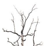 Filiali dell'albero guasto Immagini Stock