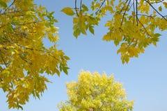 Filiali dell'autunno Fotografie Stock Libere da Diritti