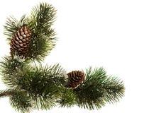 filiali dell'Pelliccia-albero. Fotografia Stock