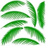 Filiali delle palme Fotografia Stock Libera da Diritti