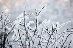Filiali dello Snowy Fotografia Stock