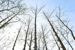 Filiali di albero Immagini Stock Libere da Diritti