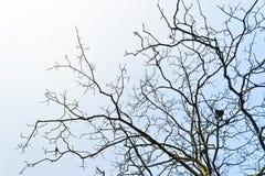 Filiali di albero Fotografia Stock