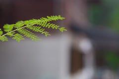 Filiali di albero Fotografia Stock Libera da Diritti