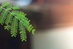 Filiali di albero Fotografie Stock