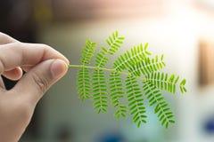 Filiali di albero Immagine Stock Libera da Diritti