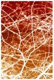 Filiali di albero bianche su colore rosso Immagini Stock Libere da Diritti