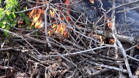 Filiali di albero Burning archivi video