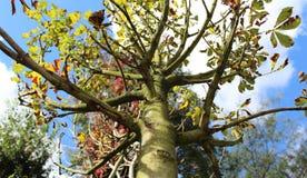 Filiali di albero con cielo blu Fotografia Stock Libera da Diritti