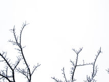 Filiali di albero congelate Immagine Stock