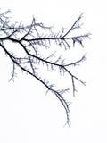 Filiali di albero congelate Fotografia Stock Libera da Diritti