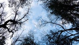 Filiali di albero contro cielo blu Fotografie Stock Libere da Diritti