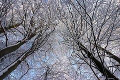 Filiali di albero coperte di gelo bianco Fotografie Stock Libere da Diritti