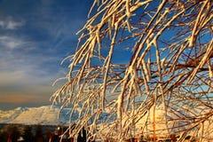 Filiali di albero coperte di neve fotografia stock