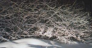 Filiali di albero coperte di neve archivi video