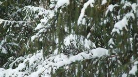 Filiali di albero coperte di neve stock footage