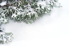 Filiali di albero dell'abete della neve nell'ambito delle precipitazioni nevose Fotografia Stock Libera da Diritti
