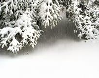 Filiali di albero dell'abete della neve nell'ambito delle precipitazioni nevose Fotografie Stock Libere da Diritti