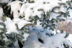 Filiali di albero dell'abete di Snowy immagini stock