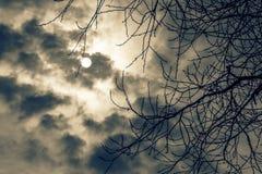 Filiali di albero di inverno Fotografie Stock Libere da Diritti