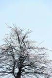Filiali di albero ghiacciate Fotografie Stock