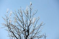 Filiali di albero ghiacciate Fotografie Stock Libere da Diritti