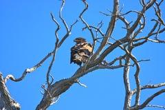 Filiali di albero Gnarly Fotografie Stock Libere da Diritti
