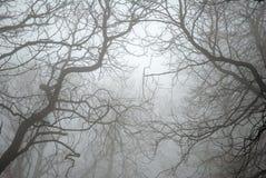 Filiali di albero nude nella nebbia Fotografie Stock Libere da Diritti