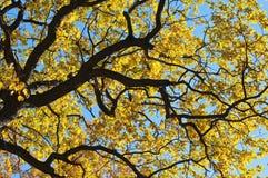 Filiali di albero su una priorità bassa del cielo Fotografia Stock