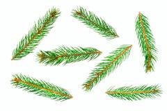 Filiali di albero verdi del pino Fotografie Stock Libere da Diritti