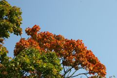 Filiali di autunno Fotografie Stock Libere da Diritti