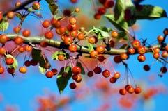 Filiali di autunno Fotografia Stock