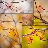 Filiali di autunno sotto pioggia Fotografia Stock