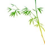 Filiali di bambù Fotografia Stock