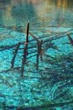 Filiali di decomposizione in lago Immagine Stock Libera da Diritti