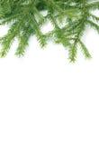 Filiali di un pelliccia-albero Immagini Stock