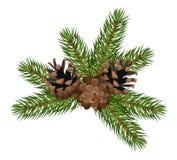 Filiali e coni di albero dell'abete. Illustrazione di vettore. Fotografia Stock